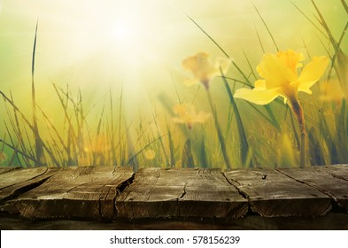 Daffodil floral spring background. Easter Spring Flowers. Elegant Mother's Day gift. Springtime green background.Wood table background