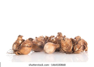 daffodil flower bulbs isolated over white background
