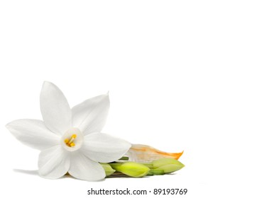 Daffodil Flower on White Background Isolated