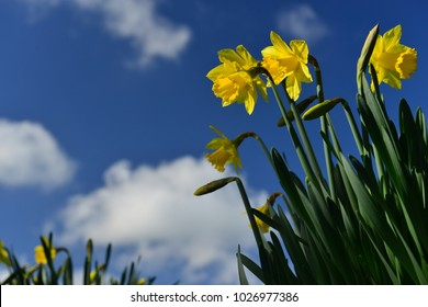 Spring Flowers Uk Images Stock Photos Vectors Shutterstock