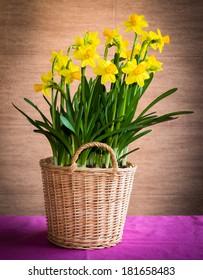 daffodil in wicker basket on table
