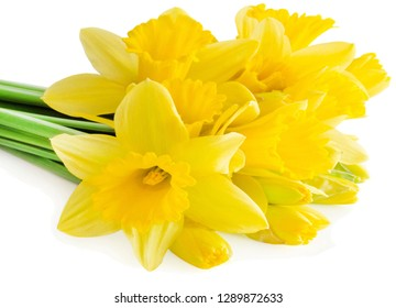Daffodils against white background