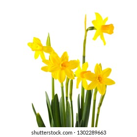 Daffodils flowers over white background, copy space