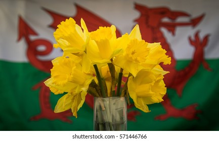 Daffodils in front of Welsh flag 1