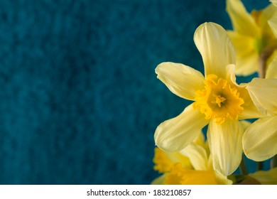Daffodils on blue background