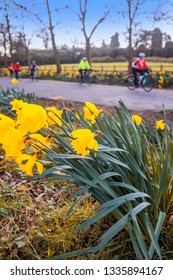daffodils side of road cyclist cycling spring