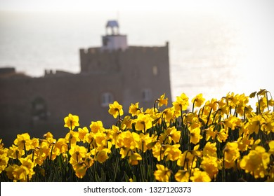 Daffodils at Sidmouth beach