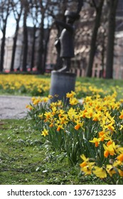Daffodils in the sun with statue on background on the lange vijverberg in Den Haag