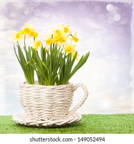Daffodils in white wicker pot with abstract sky background