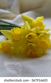 daffodils,narcissus,yellow