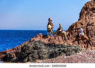 DAHAB, EGYPT - AUGUST 26, 2010: Tourists on camel trip in Abu Galum, Egypt