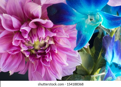 Dahlia blossom with blue orchid