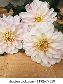 Dahlia blossoms, white petals with pink tips, green leaves, wooden background