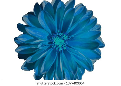 Dahlia Blue Sky Flower isolated on white background Clipping Path