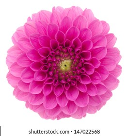 Dahlia. Deep focus. No dust. No pollen. More flower head in my portfolio.