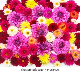 Dahlia flowers and petals 's backgrounds are all colorful.