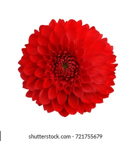 dahlia red isolate on white background for design of valentine's cards