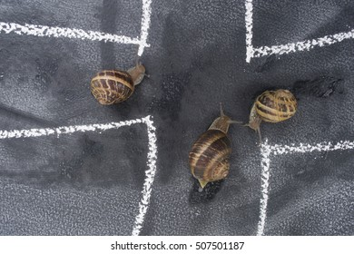 The daily road used with caution by a slow snail