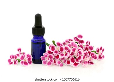 Dainthus flowers used in alternative & chinese herbal medicine with aromatherapy essential oil bottle on white with copy space. Chinensis. Qu mai. Is a diuretic and is used to treat cystitis.