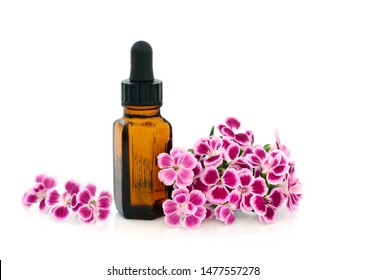 Dainthus flowers used in alternative & chinese herbal medicine with essential oil bottle on white. Chinensis. Qu mai. Used to treat cistitis, as a diuretic & stimulates uterine contractions.