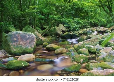 Daintree cascade - a small creek flows among rocks in the jungle Daintree National Park Australia