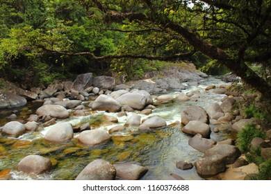 Daintree rainforest - Cairns - Australia