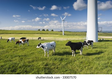 Dairy cows in a field in front of wind turbines Yorkshire England