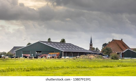 Dairy farm barns on dutch countryside with friesian holstein cows on foreground