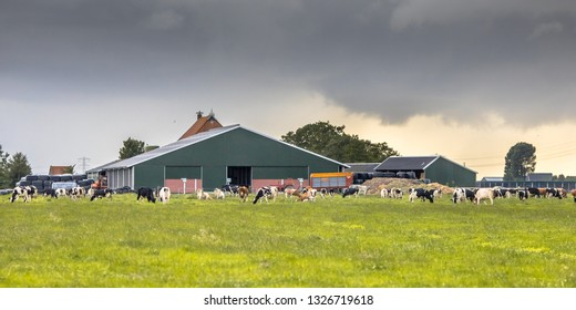 Dairy farm on dutch countryside with frisian holstein cows on foreground