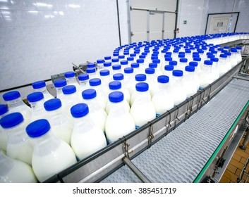 Dairy plant, conveyor with milk  bottles