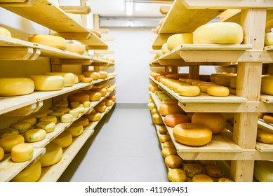 Dairy products (cheese, butter, cottage cheese, sour cream, yogurt) decorated, sliced, exhibited on wooden table in the kitchen.