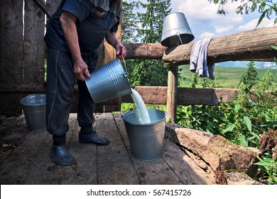 Dairyman pouring raw fresh milk from a bucket at the dairy farm in the Carpathian mountains.