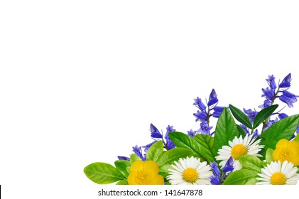 Daisies, blue and yellow wild flowers and green leaves on the white background