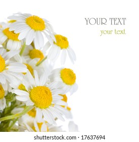 Daisies border with sample text