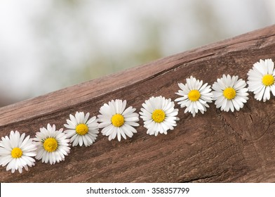 Daisies in a line on a wooden board; Greeting card for Mother's Day; All the best!