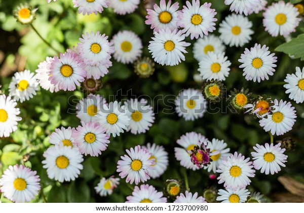 Daisies on a green summer background.