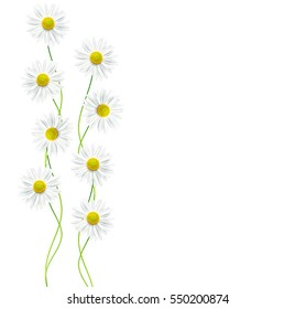 daisies summer flower isolated on white background.