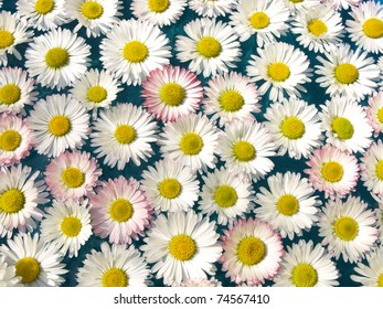 Daisies in water