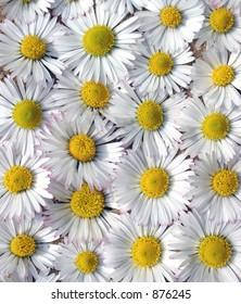 Daisy background.