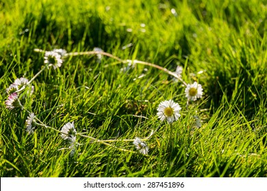 Daisy Chain in the grass