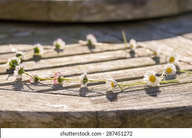 Daisy Chain on a wooden table, selective focus on foreground daisy