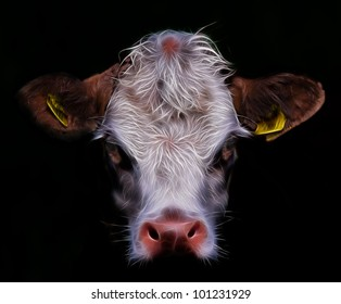 Daisy A Cow,cow face