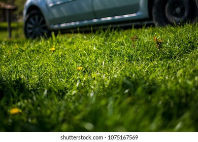 Daisy field with car in the background
