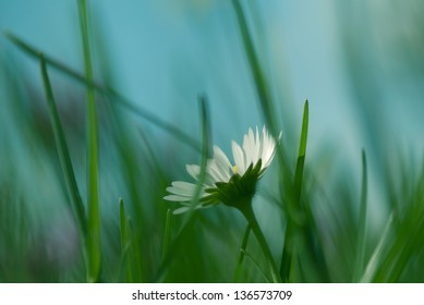 Daisy flower bathing in sunlight with shallow depth of field