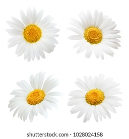 Daisy flower isolated on white background as package design element