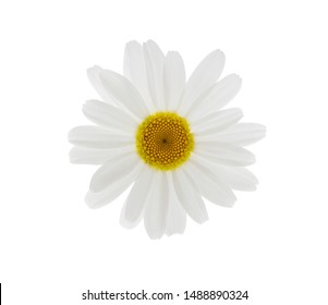 Daisy flower isolated on white background. White chamomile, element for design