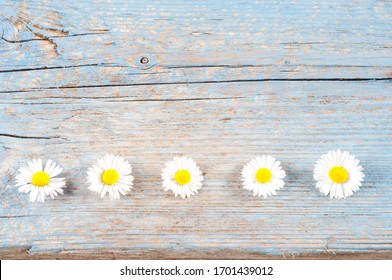 daisy flower on the old wood table