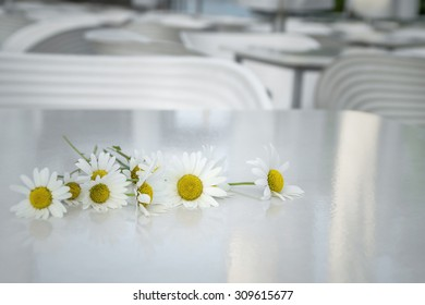 daisy flower on the table