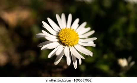 Daisy Flower Spring Nature Yellow - Shutterstock ID 1695557062