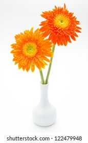 Daisy flower in vase isolated on white